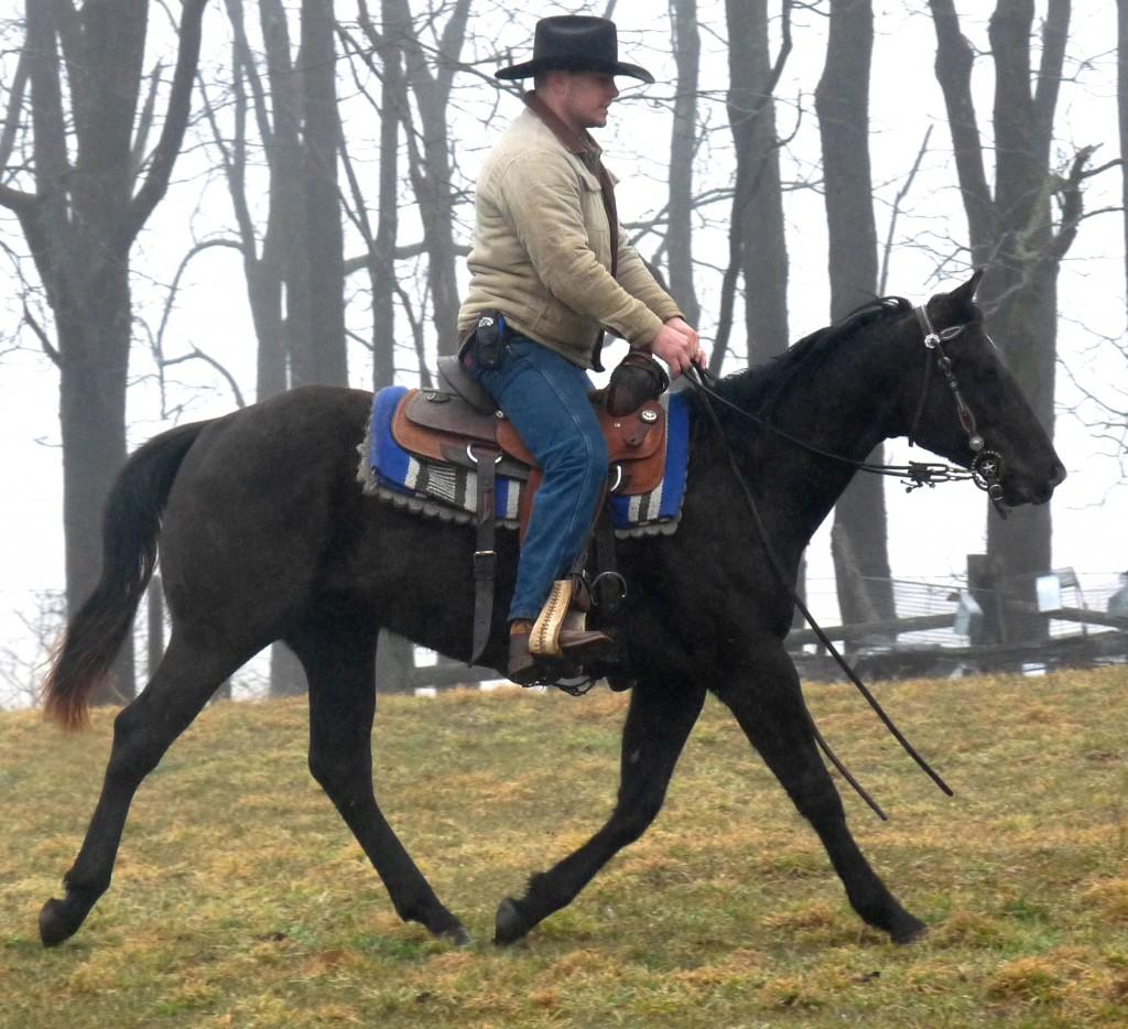Dillon under saddle