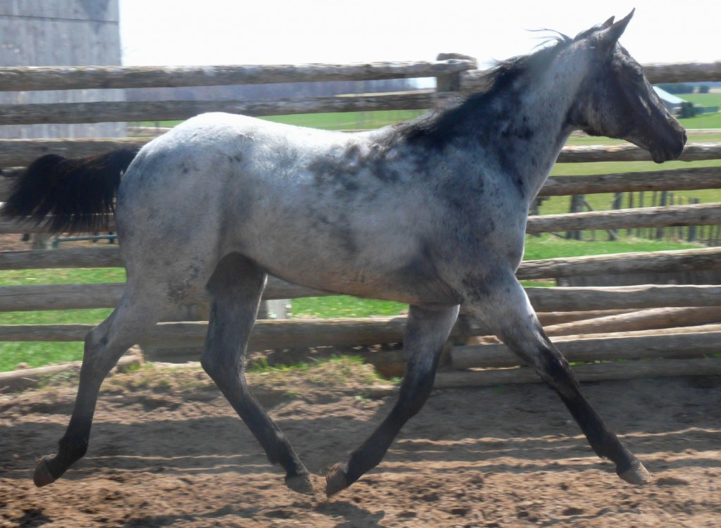 big blue filly2