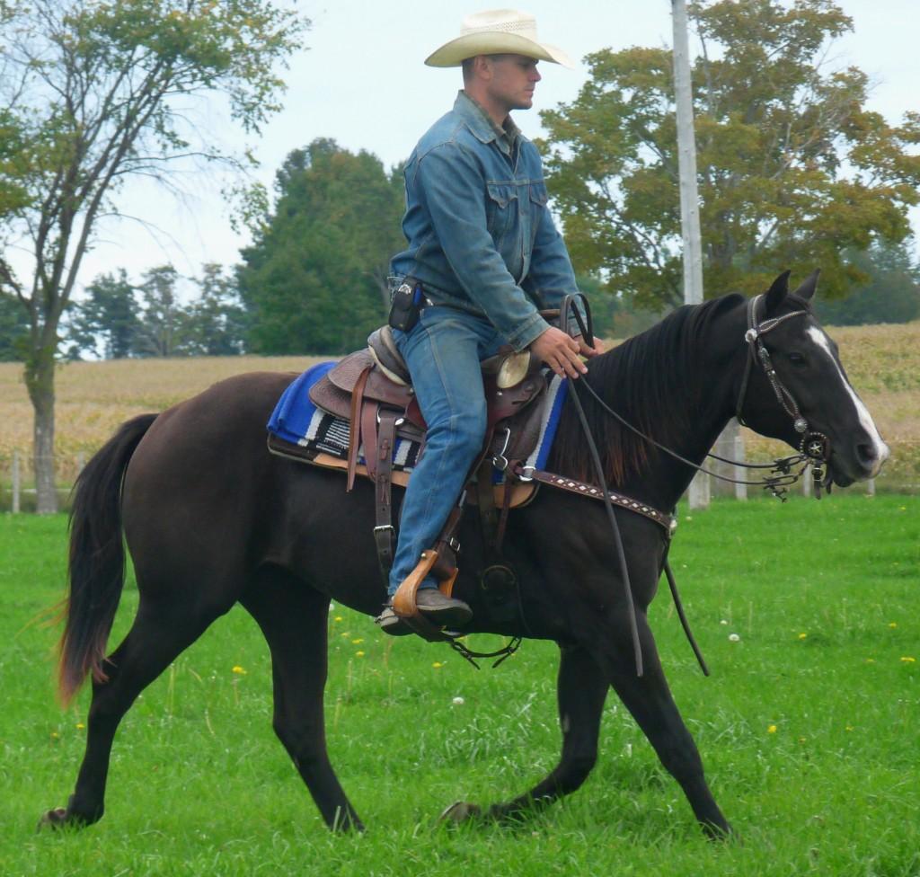 black-filly-with-blaze-under-saddle