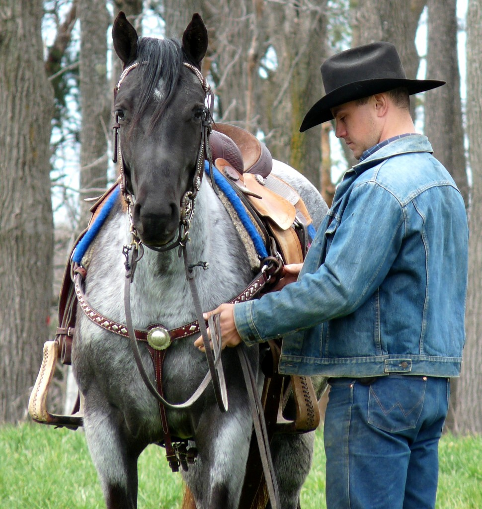 blue cowgirl filly2