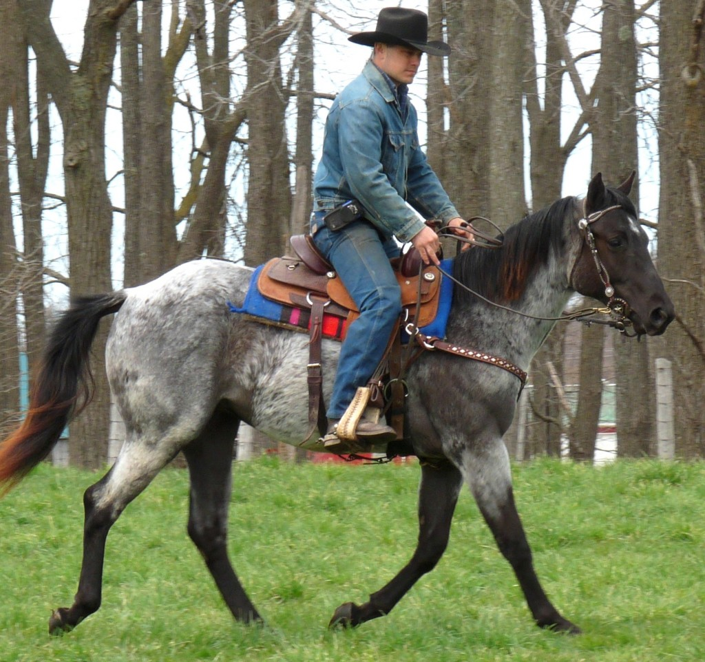 blue cowgirl filly3