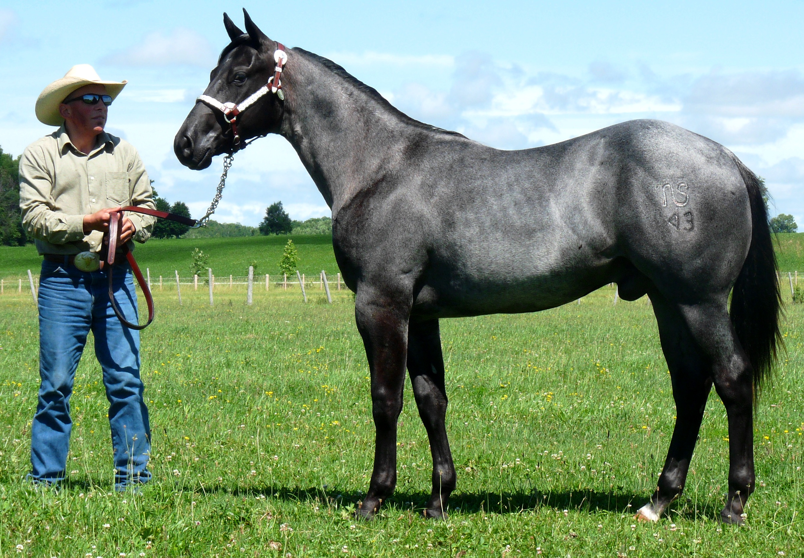 blue roan left side