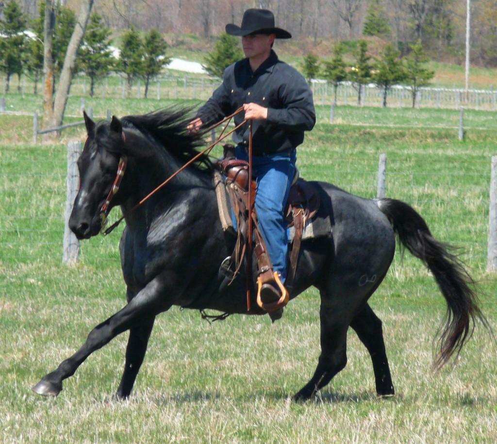 blue stallion loping