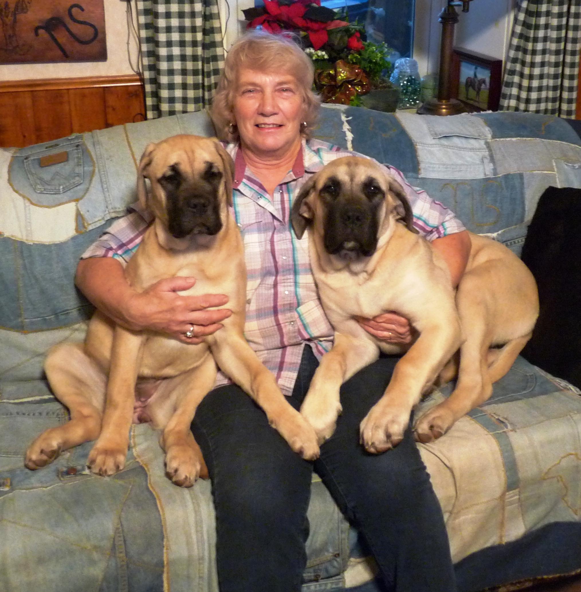 English Mastiffs – Northstar Livestock